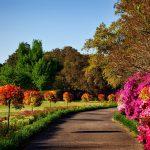 nawozy jesienne do ogrodu